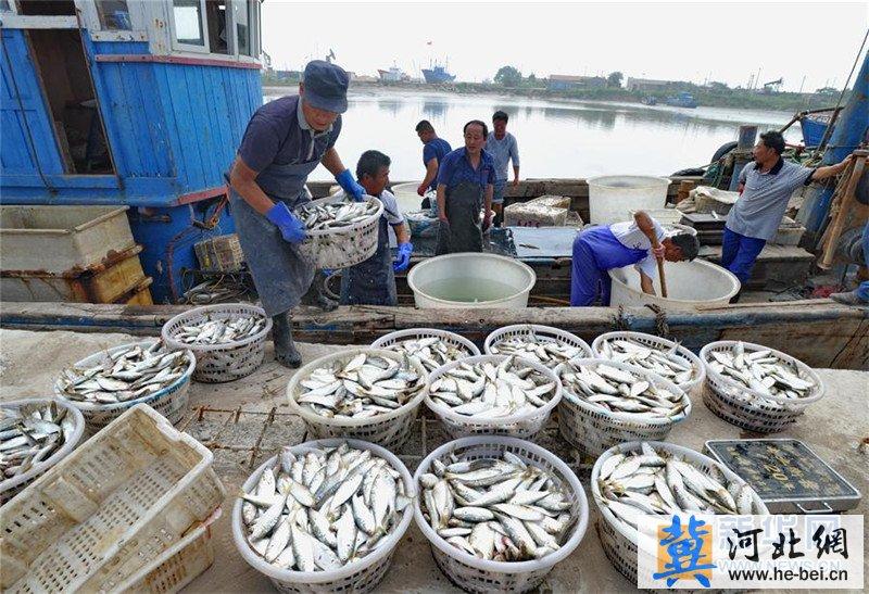 河北省黄骅市:出海归来