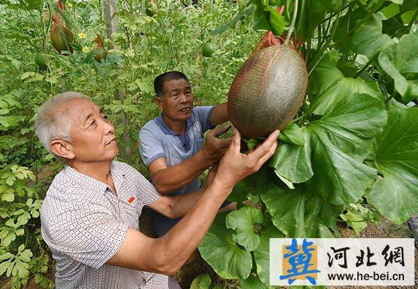 """河北省南和县:党建扶贫""""两手抓"""" 架起脱贫致富路"""